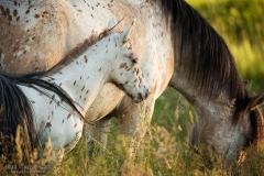 konie-slajszewo-01