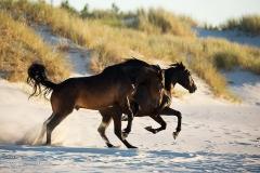 konie-slajszewo-045