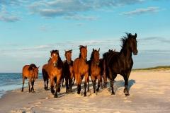 konie-slajszewo-08