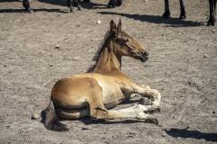 konie-slajszewo-12