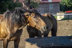 konie-slajszewo-13