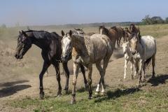 konie-slajszewo-15