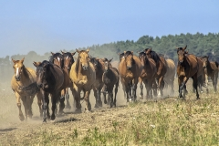 konie-slajszewo-16