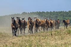 konie-slajszewo-17