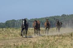 konie-slajszewo-18