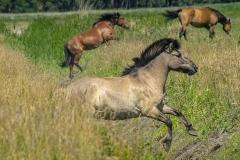 konie-slajszewo-19