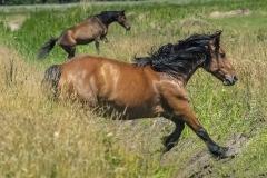konie-slajszewo-20
