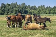 konie-slajszewo-23