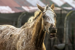 konie-slajszewo-25