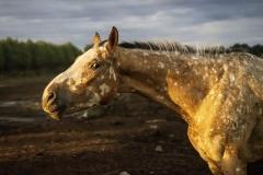 konie-slajszewo-26